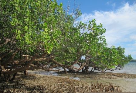 Mangrove habitats exhibit high biodiversity