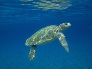 volunteer with turtles greece