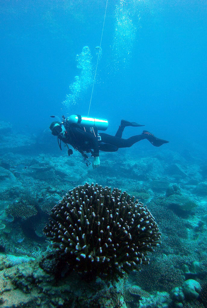 Large Coral Helps with Navigation