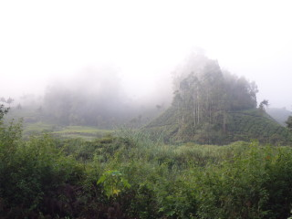 Tea plantations and beautiful hills