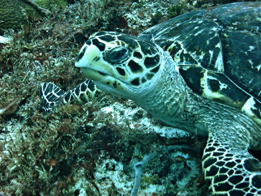 Turtle FB