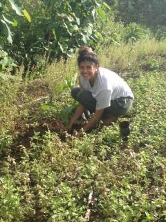 Alexis planting