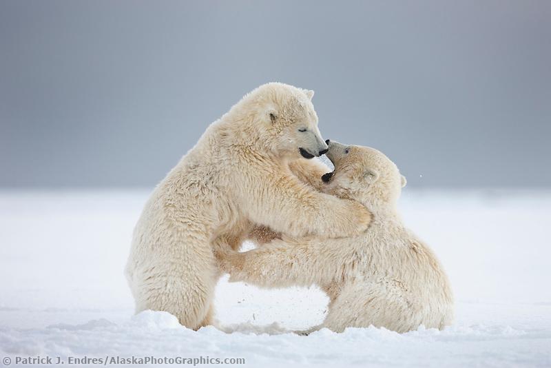 10 Stunning Photographs To Celebrate International Polar