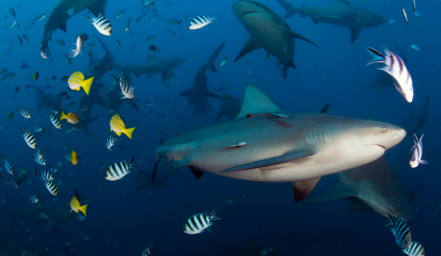 9 Stunning Photographs to Celebrate Shark Awareness Day