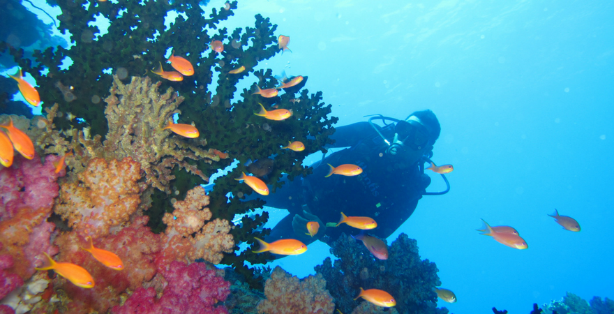 Top 5 Reasons Why You Should Take A Volunteer Adventure To Fiji