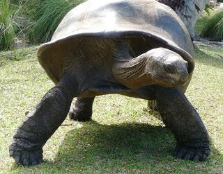 Curieuse Island Tortoise Internship