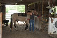 Welcome to our new Mustang rehabilitation center blog