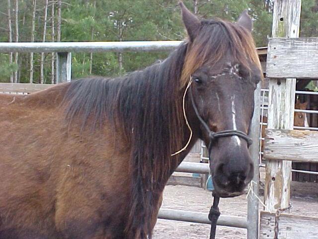 Mustangs need your help!