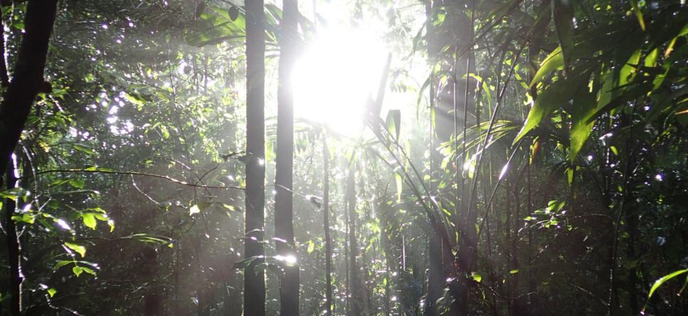 Sun shining through rainforest