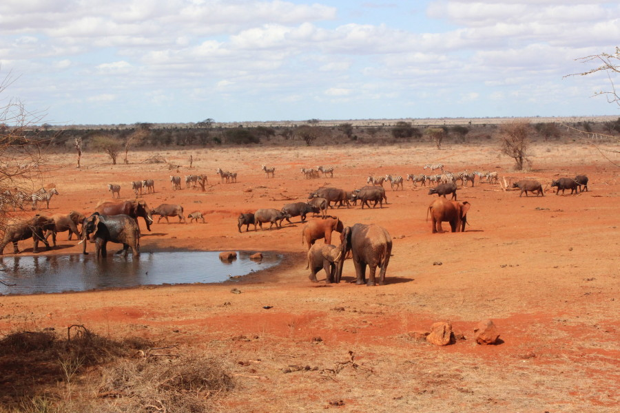 Elephants, Buffalo, Warthogs, Zebras, and even a few birds...