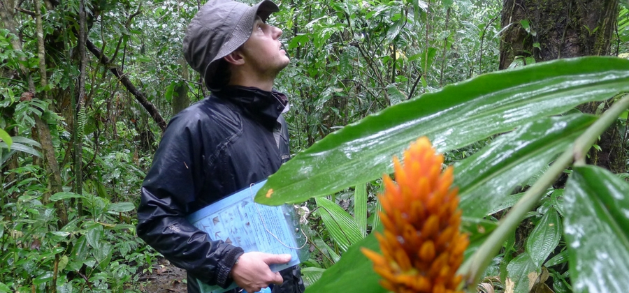 conservationist in rainforest