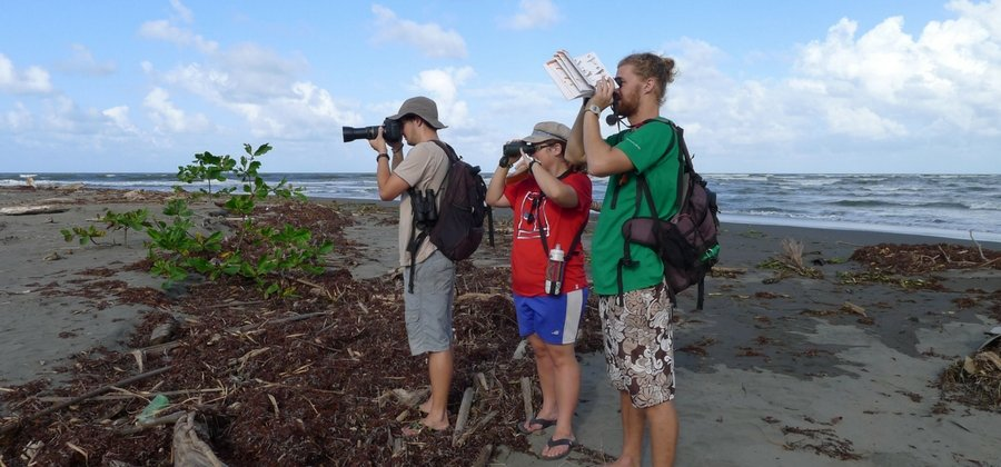 conservationists on the beach