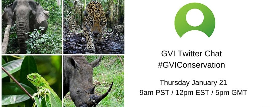 #GVIConservation Twitter Chat | GVI