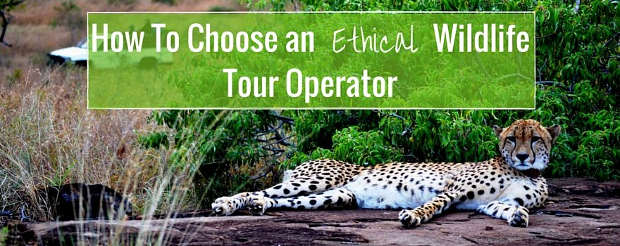 How To Choose an Ethical Wildlife Tour Operator