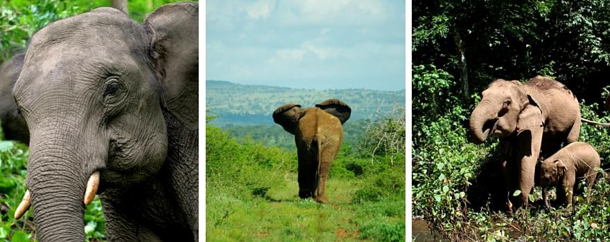 World Wildlife Day: Remembering 4 Iconic Elephants!