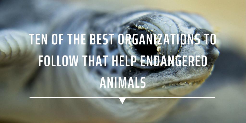 Ten of the best organizations to follow that help endangered animals