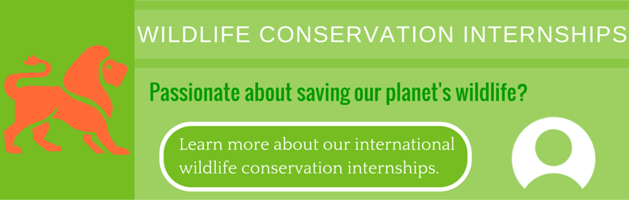 10 of The Coolest Career Paths for Modern Day Conservationalists