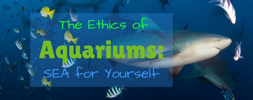 Sea for Yourself: The Ethics of Aquariums