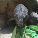 Tortoise feeding frenzy