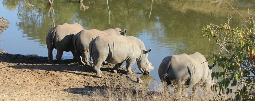 Rhino Challenge Week