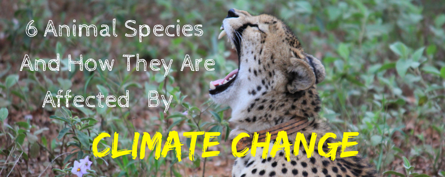 6 Animal Species And How They Are Affected By Climate Change