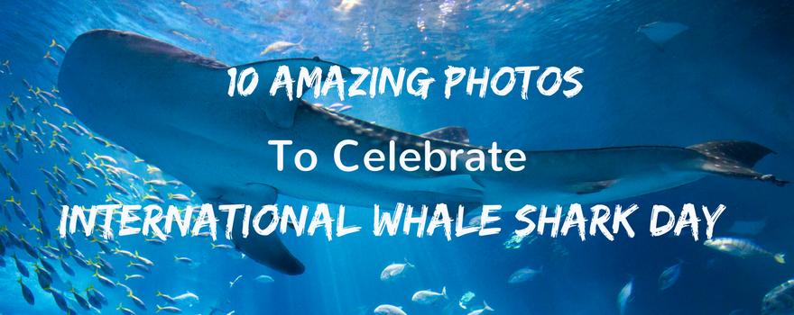 10 Amazing Photos To Celebrate International Whale Shark Day