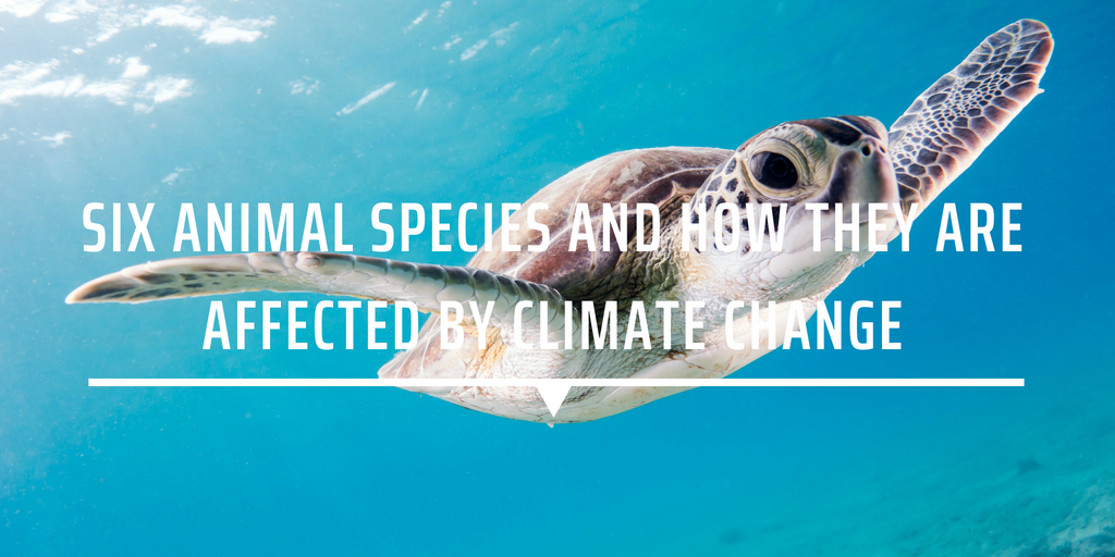 Six animal species and how they are affected by climate change