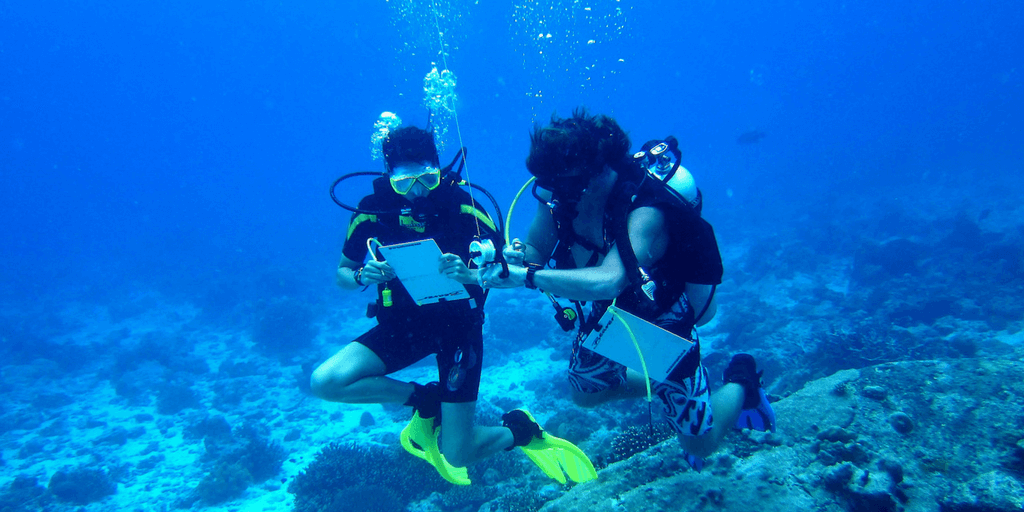 GVI interns learn about marine life research in Mexico.