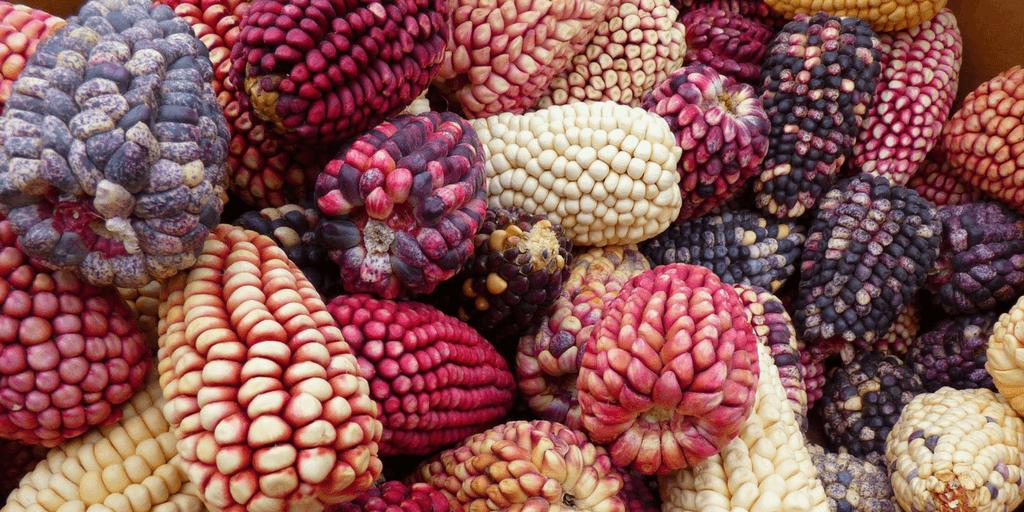 Goûtez à la cuisine péruvienne en faisant du bénévolat à l'étranger à Cusco.