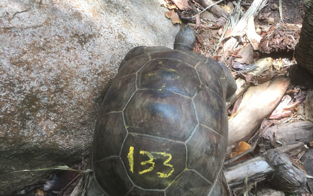 Q: How do you find the biggest Giant Tortoise on the Island? A: You don't, instead you find a new tortoise altogether!