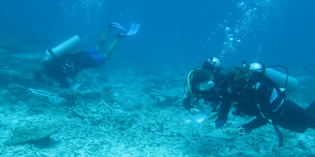 Seychelles Marine Biology Volunteer Opportunity