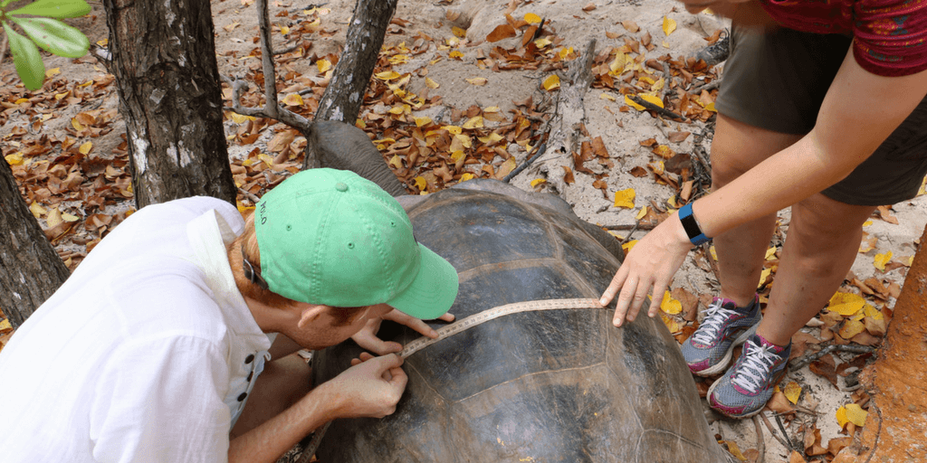 Giant Tortoise Conservation In Seychelles
