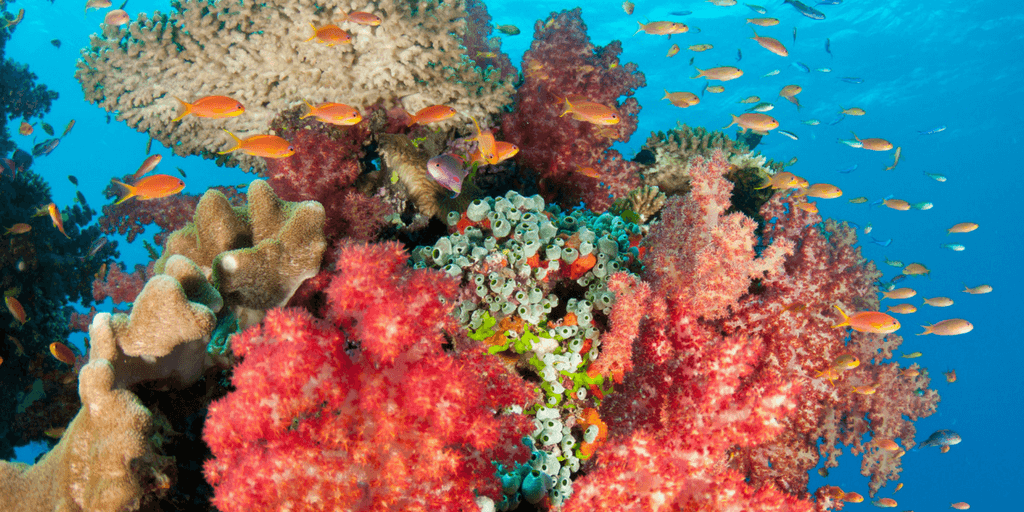 Summer Coral Reef Research Program In Fiji