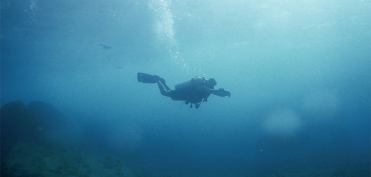 Diving head first into new adventures!
