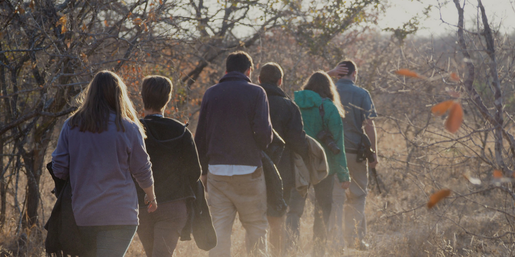Volunteers in Karongwe get to experience a wildlife walk on foot.