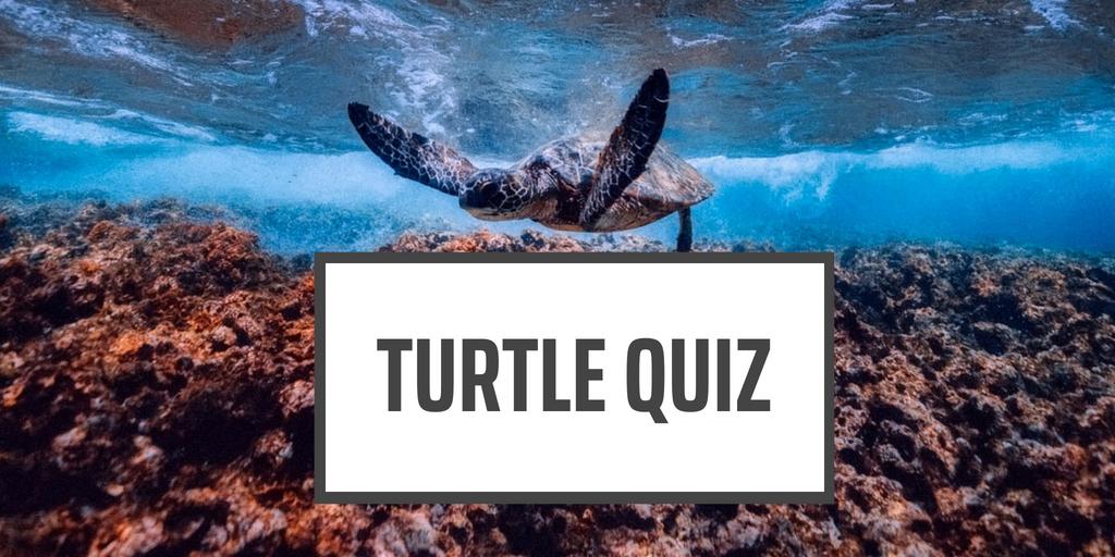 Turtle Quiz