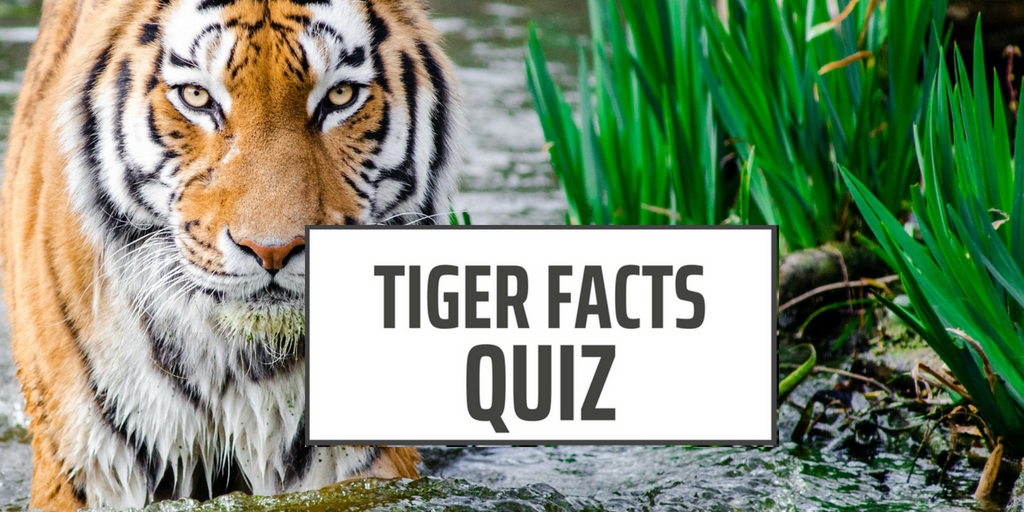 Tiger Facts Quiz