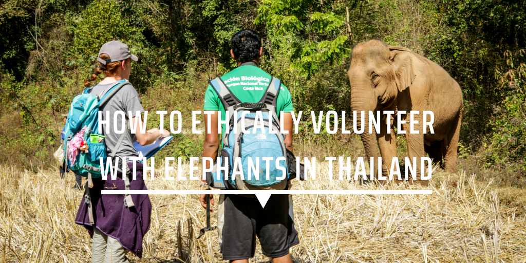 How to ethically volunteer with elephants in Thailand