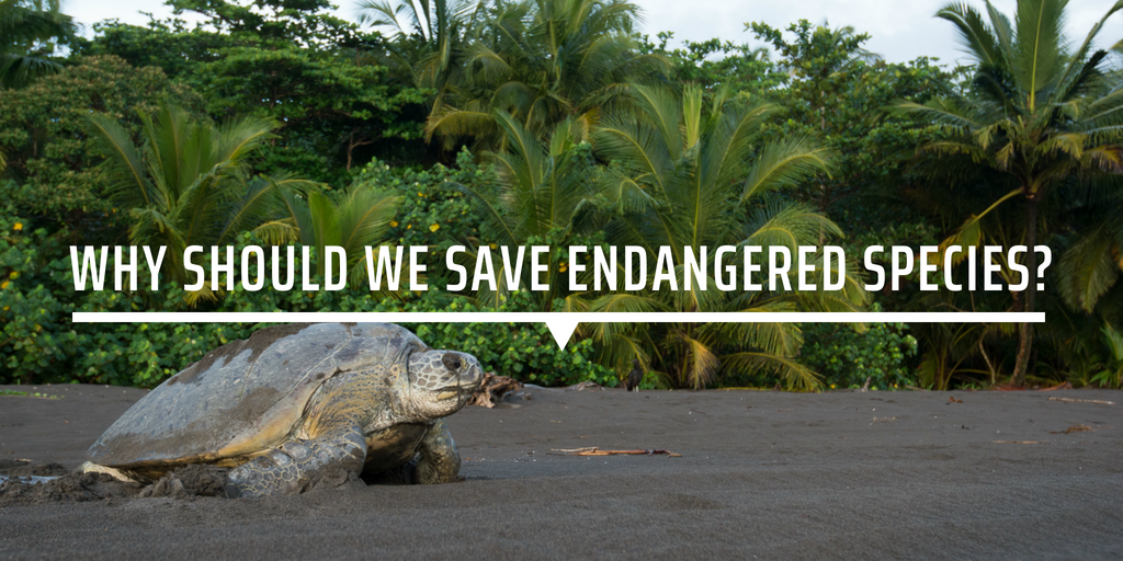 Why should we save endangered species?