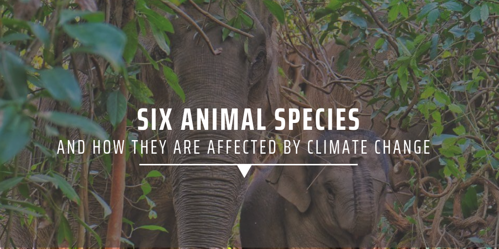 six animal species affected by climate change