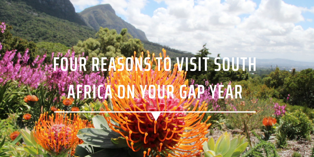 Four Reasons to visit South Africa on your Gap Year
