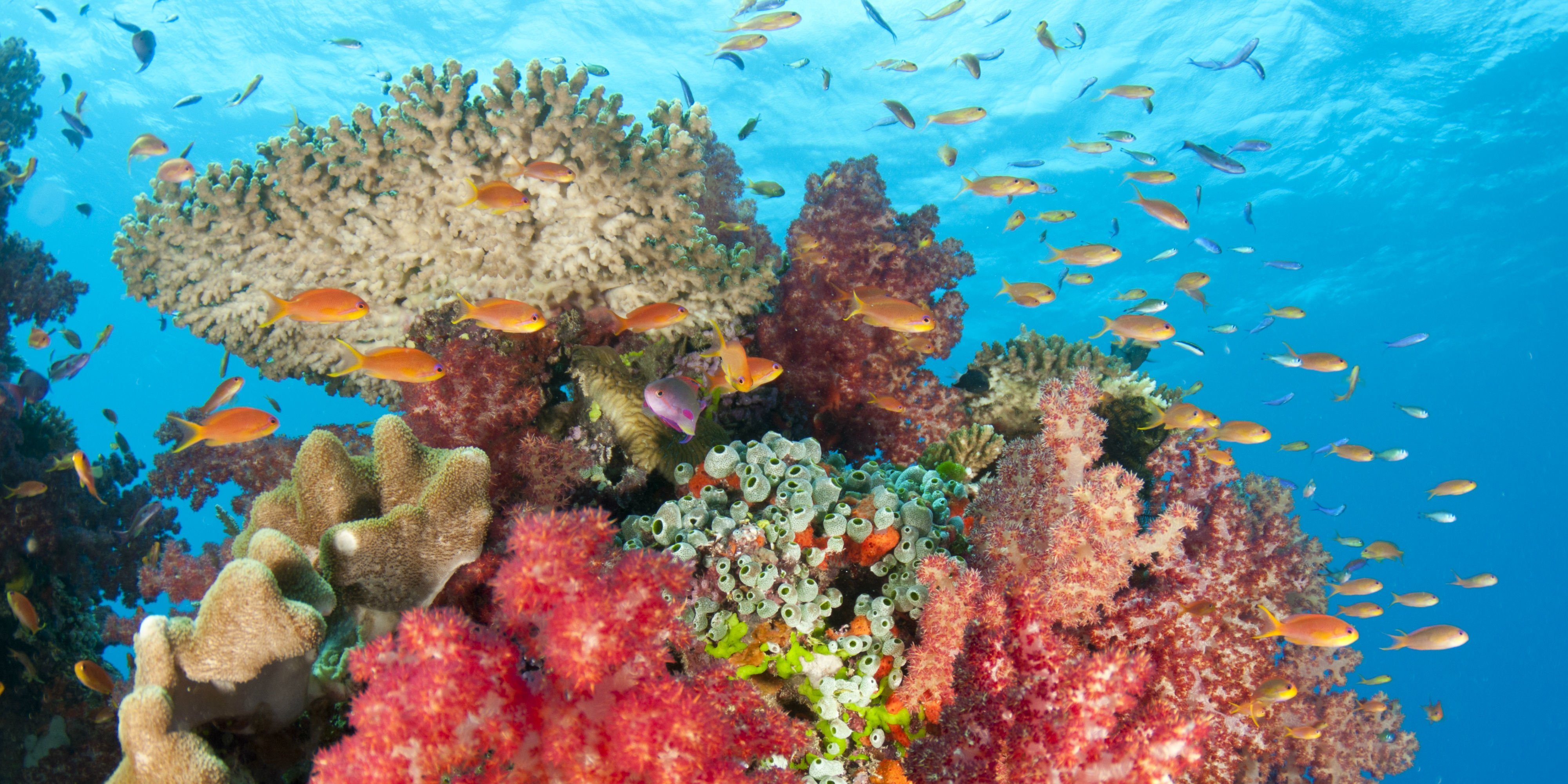 A coral reef in Fiji supports a diverse marine ecosystem. Small steps to help save the oceans will help preserve these fragile marine environments.