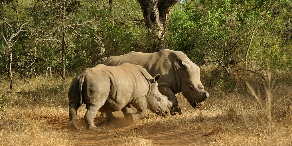 support rhino conservation