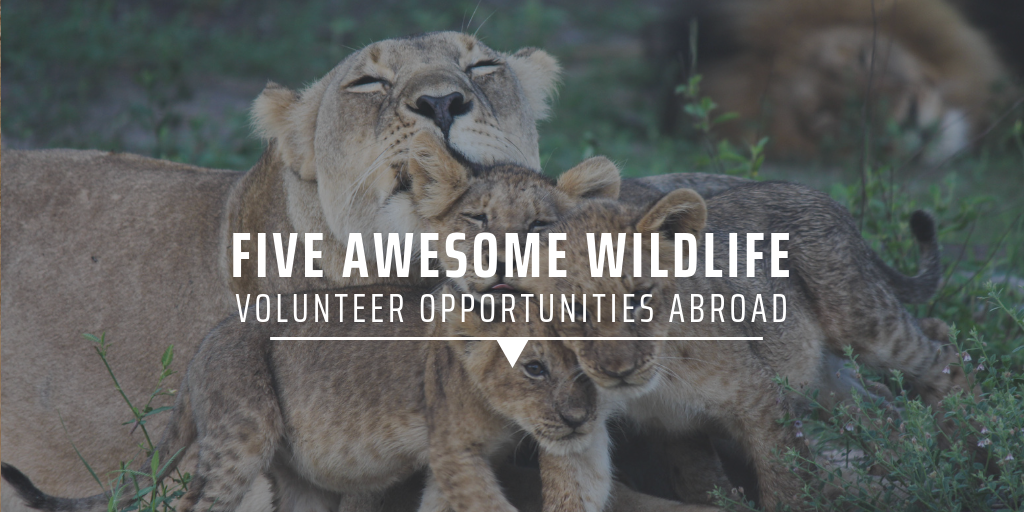 Five awesome wildlife volunteer opportunities abroad