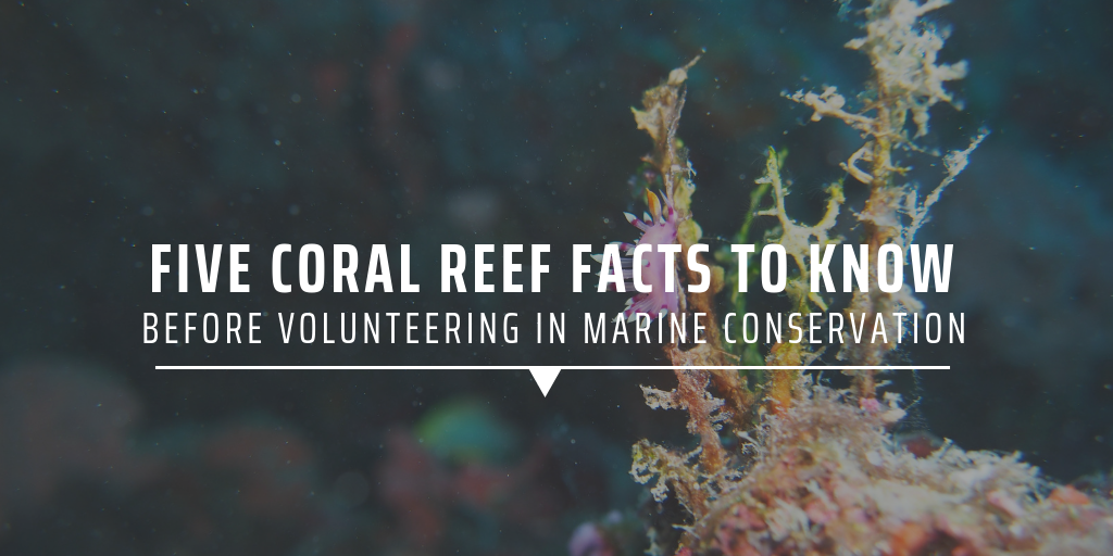 Five coral reef facts to know before volunteering in marine conservation