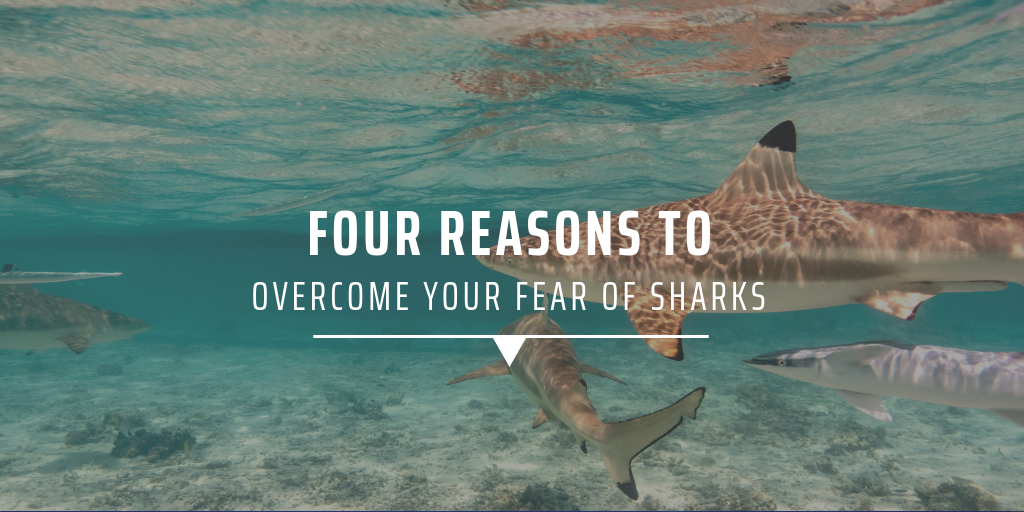 Four reasons to overcome your fear of sharks