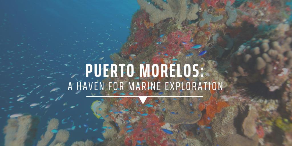 Puerto Morelos: A haven for marine exploration