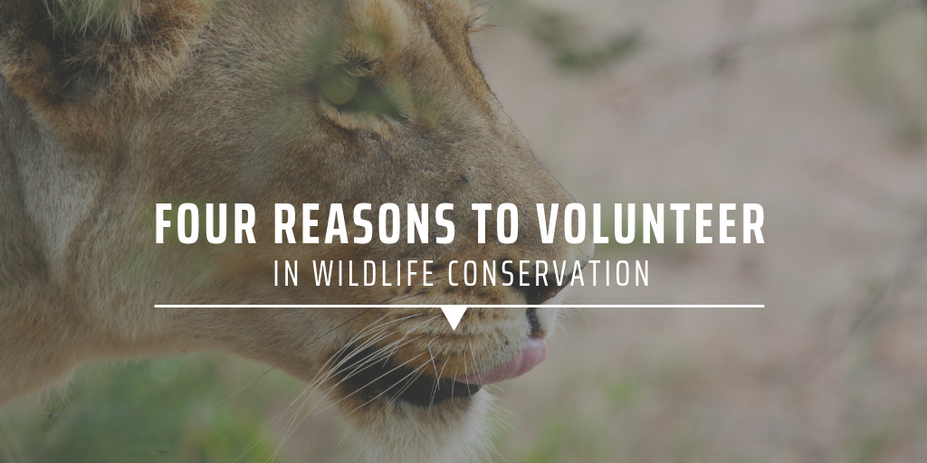 Four reasons to volunteer in wildlife conservation