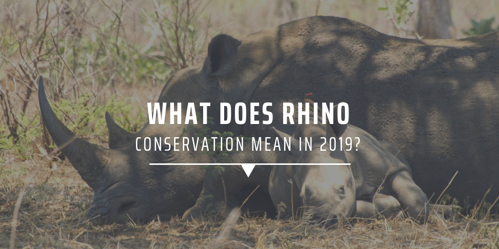 What does rhino conservation mean in 2019?
