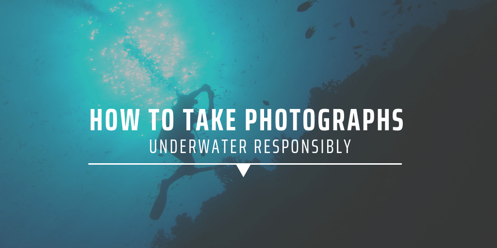 How to take photographs underwater responsibly
